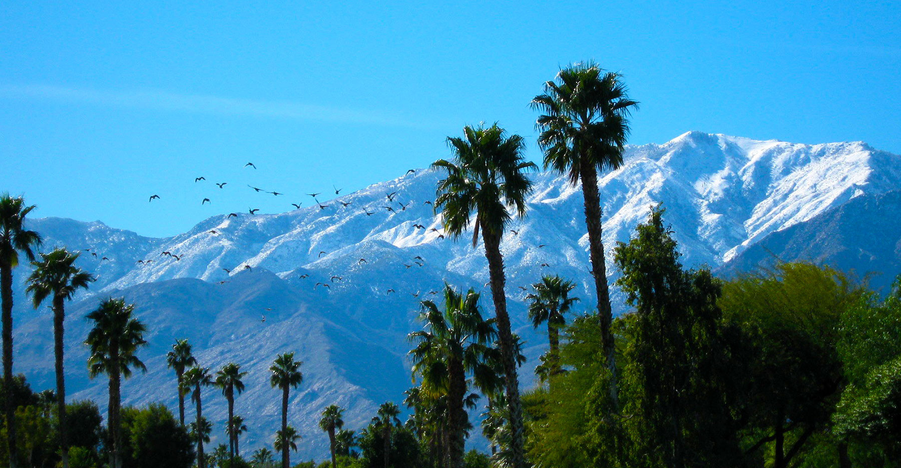 Vacation Rentals Desert Princess Collection Palm Springs Ca